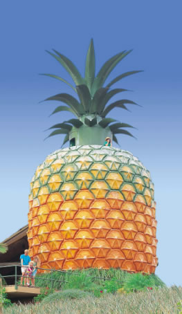 The Big Pineapple - Broome Tourism