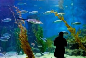 Melbourne Aquarium - Broome Tourism